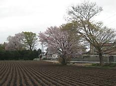 20130410_b_4